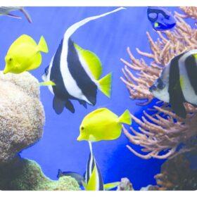Mauspad Fellowes Earth Series Unterwasser 5909301